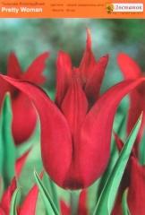 Тюльпан Pretty Woman (1шт)