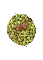 Цибуля-сівок Голіат*озима* (500г)