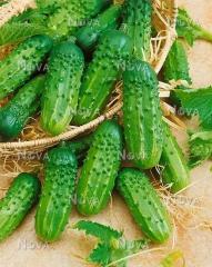 Огірки Герман (250шт)