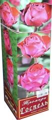 Троянда чайно-гібридна Госпель АА преміум (1шт)
