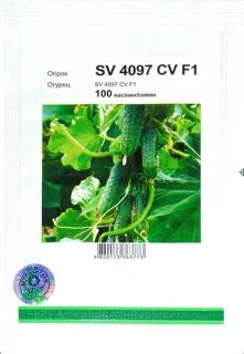 Огірки СВ 4097 F1 (100шт)