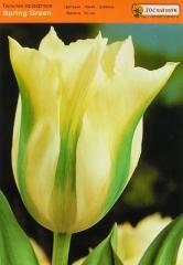 Тюльпан Spring Green
