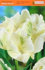Тюльпан White Parrot (1шт)