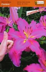 Лілія Джіордана гігантська квітка (1шт)