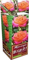 Троянда чайно-гібридна Бірді АА преміум (1шт)