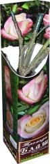 Троянда чайно-гібридна Блуш АА преміум1 (1шт)